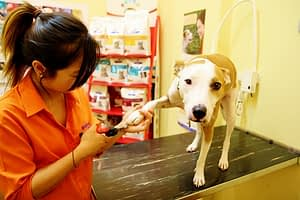 medium short hair dog holding paw up to get his nail trimmed